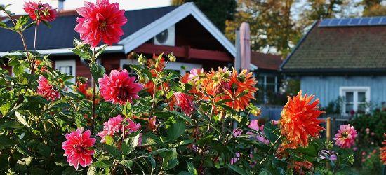 NIEDZIELA: Targi ogrodnicze w Ustrzykach Dolnych!