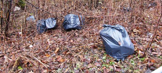 Dzikie wysypisko śmieci na stromym brzegu Sanu (ZDJĘCIA)