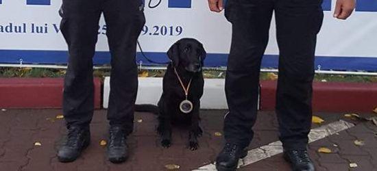 Labradorka Gina najlepsza w międzynarodowych mistrzostwach psów (ZDJĘCIA)