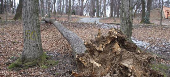 SANOK: Niebezpiecznie w parku. Spadają kolejne drzewa! (ZDJĘCIA)