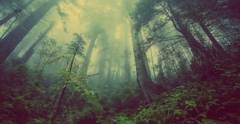 POWIAT SANOCKI: Poszukiwania mężczyzny, który wybrał się na grzyby