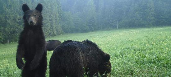 BIESZCZADY: Leje okrutnie… mokną żubry i niedźwiedzie (ZDJĘCIA)