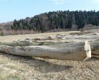 Burmistrz Miasta i Gminy Zagórz ogłasza przetarg ofertowy na sprzedaż drewna wielkowymiarowego i średniowymiarowego