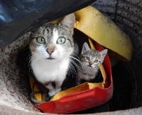 LESKO24.PL: Nadzwyczajna sesja w sprawie 4 bezpańskich kotów (FILM)