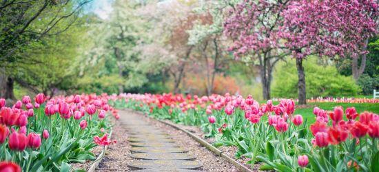 """LUTOWISKA: Targi ogrodnicze """"Wiosna w ogrodzie"""""""