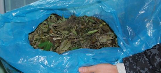 REGION: Zabezpieczyli ponad 3 kg marihuany