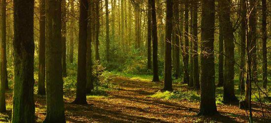 ZAGÓRZ. 53-latka zgubiła się w lesie. Pomogli policjanci