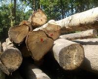 ZAGÓRZ24.PL: Przetarg ofertowy na sprzedaż drewna