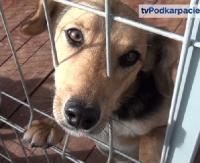 """LESKO24.PL: Marzenia się spełniają. """"Wesoły Kundelek"""" ostoją dla bezdomnych psów (FILM)"""