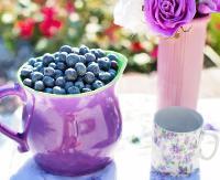 BIESZCZADY / DWERNIK: Będą promować ochronę przyrody i jagodowe smakołyki!