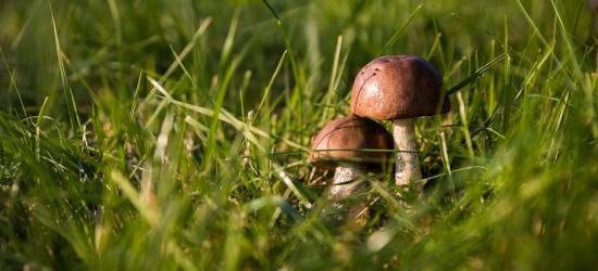 Trwa sezon na grzyby. Policja apeluje o ostrożność
