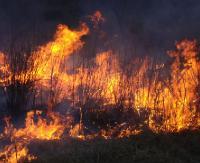 SANOK: Nieprzewidywalny ogień i dużo dymu. Pożary suchych traw to nieodłączny obrazek wczesnej wiosny (FILM)
