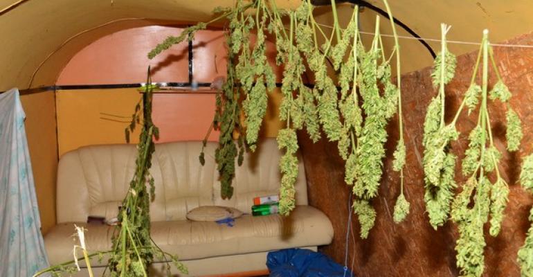 REGION: Susz ziela konopi ukryty w baraku (FOTO)