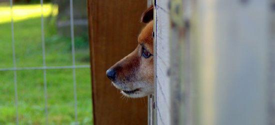 PODKARPACIE: Awantura i znęcanie się nad psem