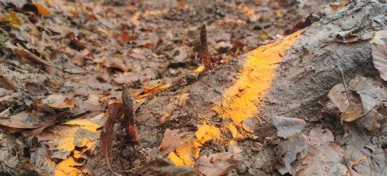Metalowe pręty umocowane na leśnym szlaku (FOTO)