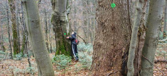 BIESZCZADY: Leśnicy kontra aktywiści. Ekolodzy przeciw wycince w Mucznem
