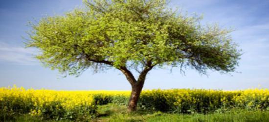 """Dzisiaj akcja ,,Drzewko dla sanoczan"""". Przyjdź po swoją sadzonkę"""