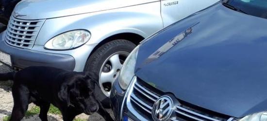 Maltretowany pies trafił do sanockiego STONZ-u (VIDEO HD)
