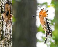 BIESZCZADY: Życie lasu zaklęte w kadrach. Znamy wyniki konkursu fotograficznego!