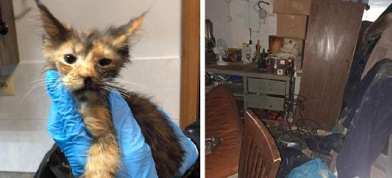 Fetor, odchody i zwierzęta w tragicznym stanie. Jeden z kotów zmarł w trakcie interwencji (ZDJĘCIA)