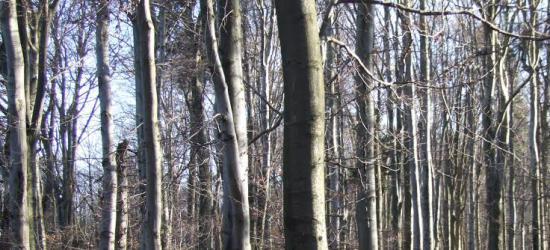 Mała retencja zatrzyma wodę w lesie