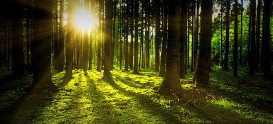 Lasy Państwowe pomagają w walce z epidemią