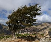 BIESZCZADY: Porywisty wiatr do 100 km/h