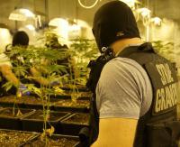Zlikwidowali gigantyczną wytwórnię marihuany (ZDJĘCIA)