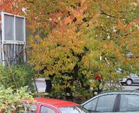WRACAMY DO SPRAWY: Znamy wyniki sekcji zwłok mężczyzny znalezionego na drzewie
