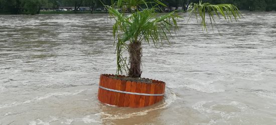 SANOK: Plaża zalana. Palma w wodzie (VIDEO, ZDJĘCIA)