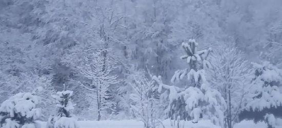 """""""Bestia ze wschodu"""" w Bieszczadach. VIDEO z dzisiejszego poranka!"""