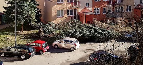 SILNE WIATRY: Powalone drzewa, zerwane reklamy, brak prądu (FOTO)