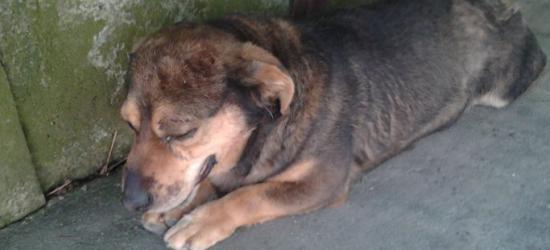 Bestialsko pobił psa i chciał pogrzebać go żywcem (ZDJĘCIA)