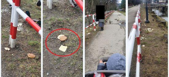 SANOK: Kaczki dokarmiane hamburgerami? (ZDJĘCIA)