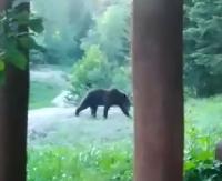 BIESZCZADY: Spotkanie z niedźwiedziem w Stuposianach. Zwierzę spacerowało tuż przy turystach (FILM)