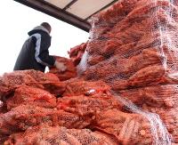 Darmowa marchew dla sanoczan i mieszkańców regionu