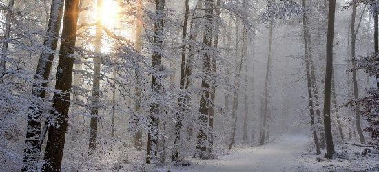 Poszukiwania 15-latka w Bieszczadach. Chłopiec odnaleziony w lesie