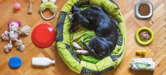 Wyprawka dla psa – co powinieneś dla niego kupić