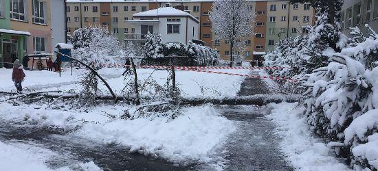 SANOK. Obok szkoły i przedszkola runęło ogromne drzewo (VIDEO, ZDJĘCIA)
