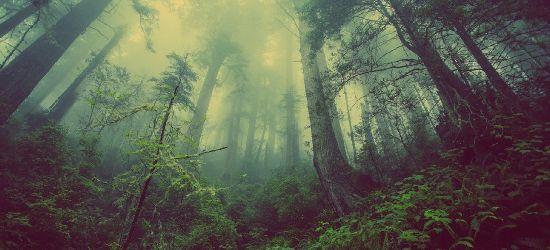 81-letni mężczyzna zaginął w lesie. Szczęśliwy finał poszukiwań