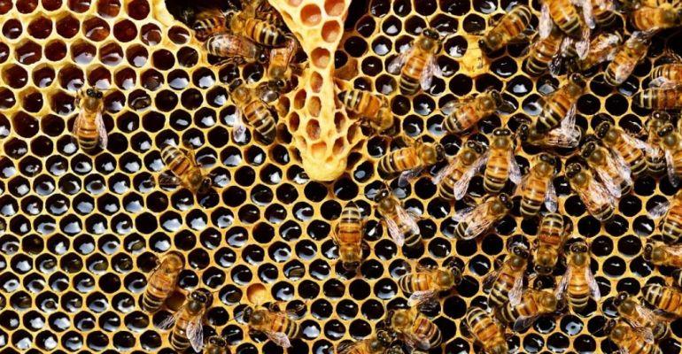 SANOK: Choroby pszczół i sposoby ich zwalczania. SPRAWDŹ