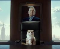 """KINO NA PIĄTEK: """"Jak zostać kotem"""" na ekranie plenerowym. Obejrzycie? (ZWIASTUN)"""