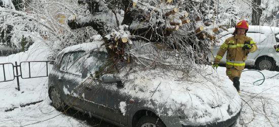 SANOK: Na samochód spadło drzewo! (VIDEO, ZDJĘCIA)
