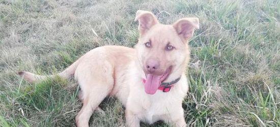 GMINA ZARSZYN: Pomóżmy znaleźć dom dla psiaka!