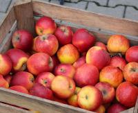 Znów będą rozdawać jabłka. Sprawdź kiedy