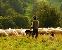 W sanockim Skansenie powstanie sektor pasterski. Rozpoczęło się odtwarzanie stada owiec i kóz