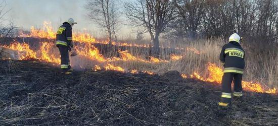 Pierwsze pożary suchej trawy (ZDJĘCIA)