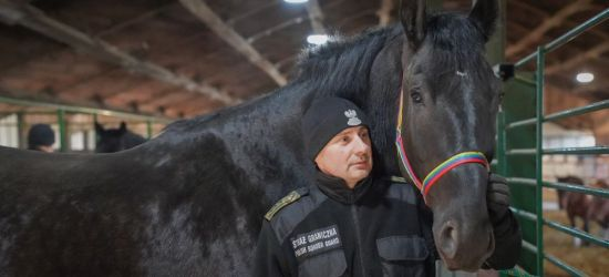 Nowe konie w służbie na granicy w Bieszczadach (VIDEO, ZDJĘCIA)