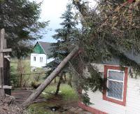 SANOK: Kolejne powalone drzewo. Tym razem nieszczęśliwie upadło na dom jednorodzinny (ZDJĘCIA)