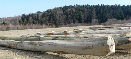 Sprzedaż drewna z lasów krośnieńskiej dyrekcji